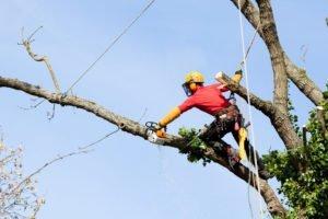 Birstall Tree Services