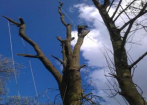 Birstall Tree Services Tree Pruning