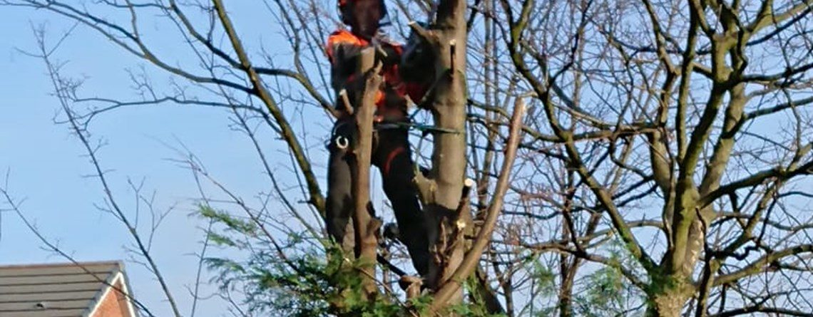 Tree Surgeon Tree Pruning
