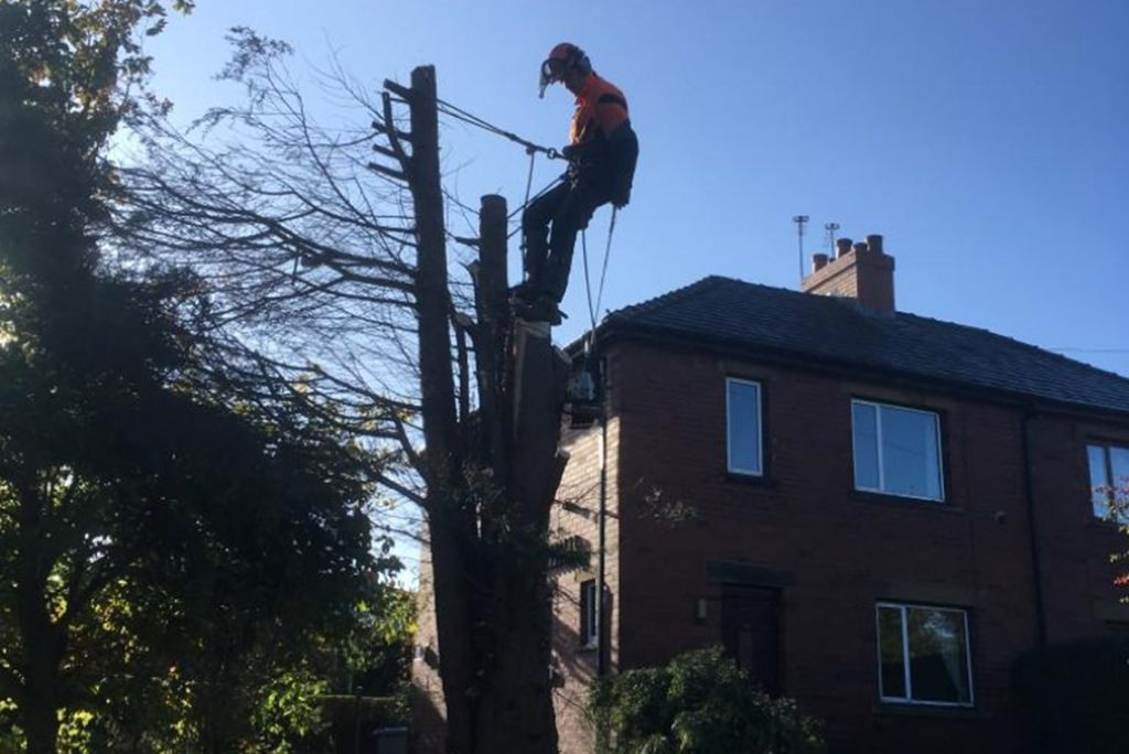 Conifer Removal and Stump Ground Out - Birstall Tree Services