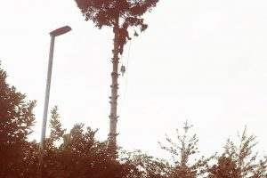 Birstall Tree Services - Christmas Tree Removal