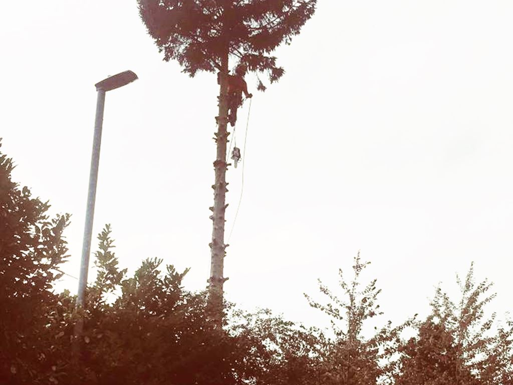 Birstall Tree Services - Christmas Tree Removal