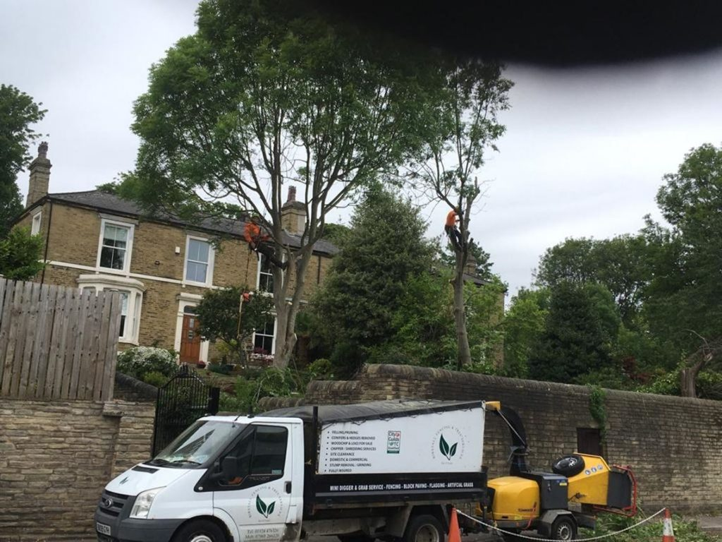 Birstall Tree Services - Conifer Removal